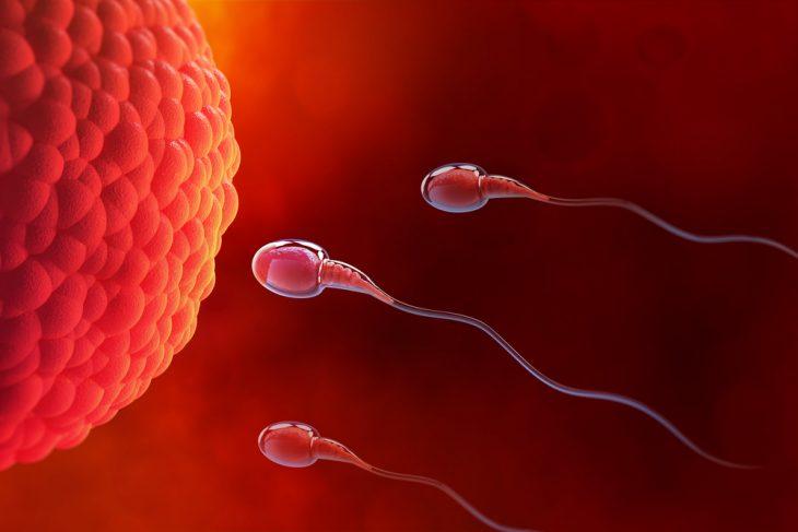 Воздействие алкоголя на яйцеклетки – советы планирующим зачатие