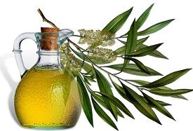 масло-чайного-дерева